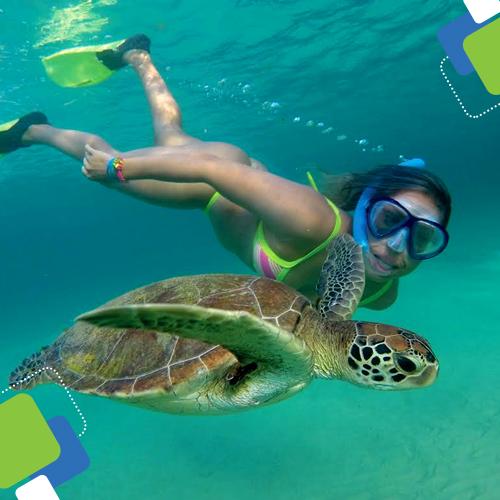 Muito comum encontrar tartarugas marinhas em Fernando de Noronha.