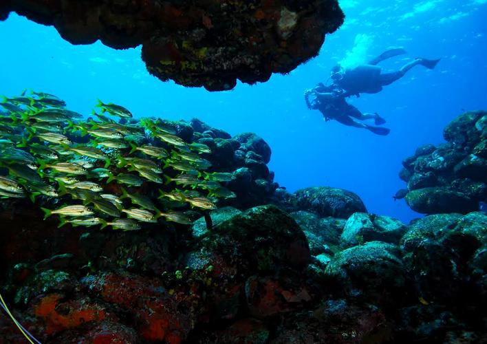 mergulho-em-noronha-2