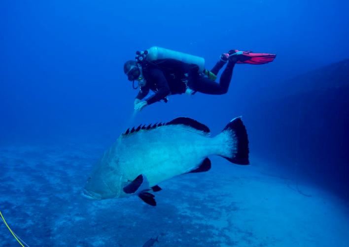 mergulho-em-noronha-3