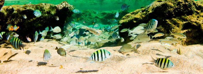 vida marinha de noronha